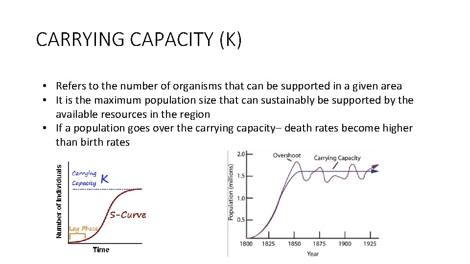 CARRYING CAPACITY (K) • Refers to the number of organisms that can be supported