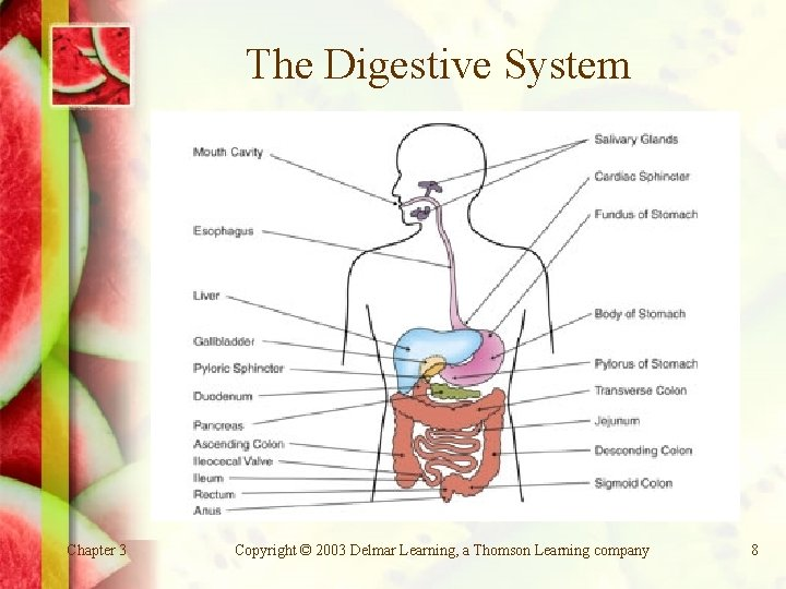 The Digestive System Chapter 3 Copyright © 2003 Delmar Learning, a Thomson Learning company
