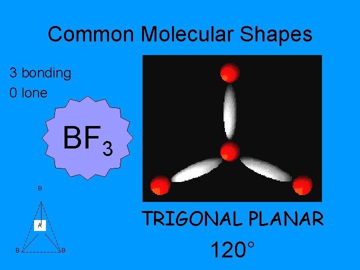 Common Molecular Shapes 3 bonding 0 lone BF 3 B TRIGONAL PLANAR A B