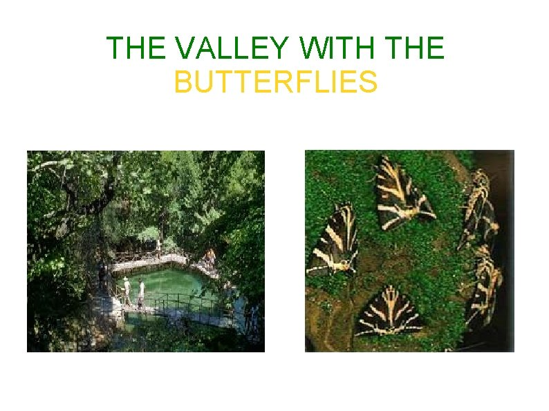 THE VALLEY WITH THE BUTTERFLIES