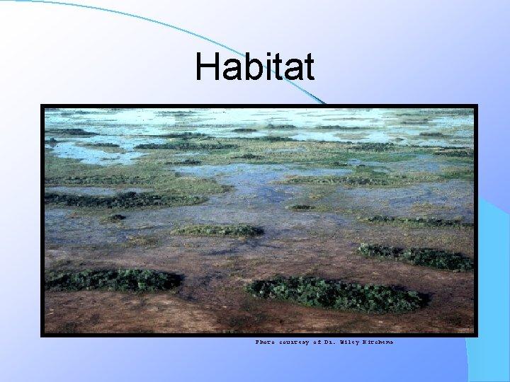 Habitat Photo courtesy of Dr. Wiley Kitchens