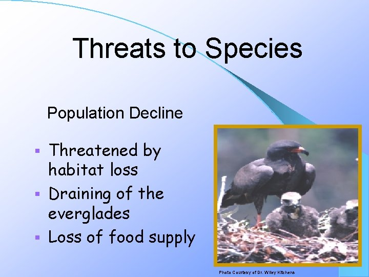 Threats to Species Population Decline Threatened by habitat loss § Draining of the everglades