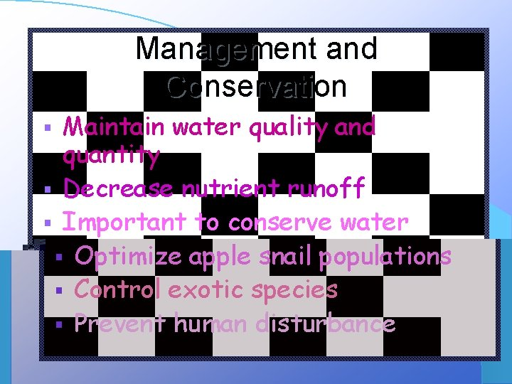 Management and Conservation § § § Maintain water quality and quantity Decrease nutrient runoff