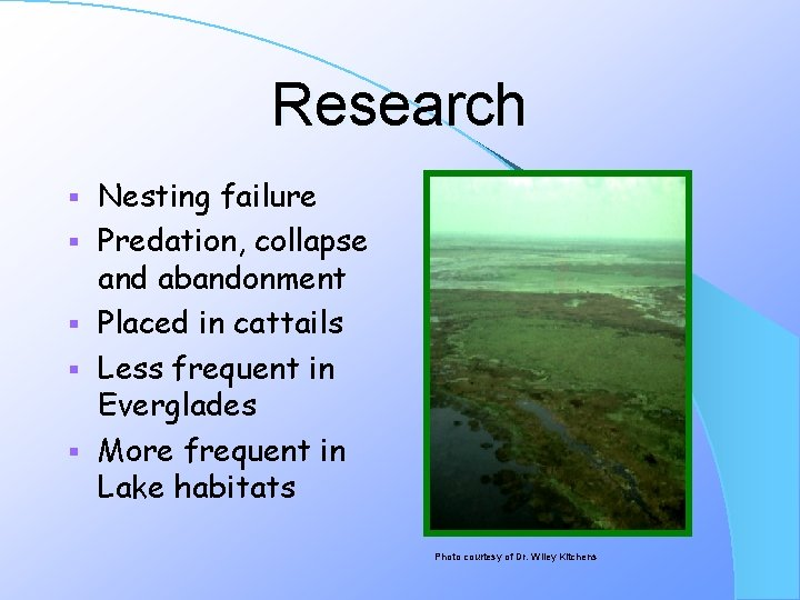 Research § § § Nesting failure Predation, collapse and abandonment Placed in cattails Less