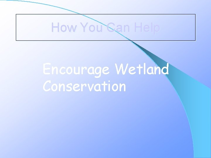 How You Can Help Encourage Wetland Conservation