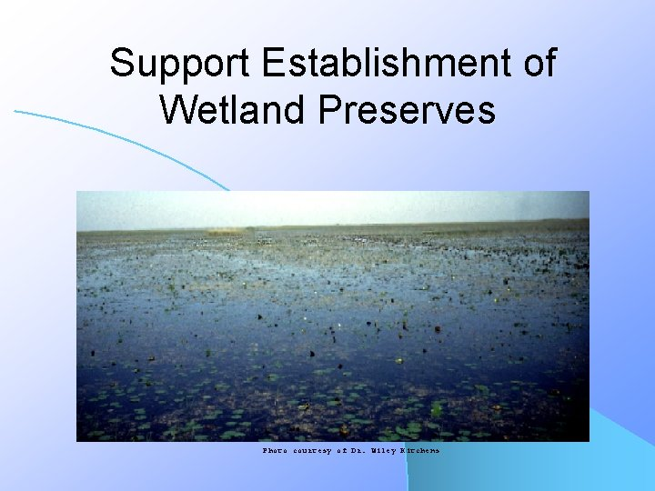 Support Establishment of Wetland Preserves Photo courtesy of Dr. Wiley Kitchens