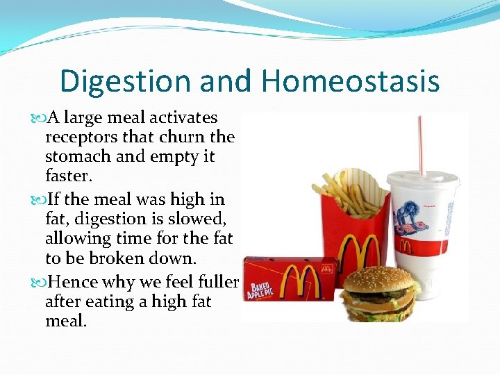 Digestion and Homeostasis A large meal activates receptors that churn the stomach and empty