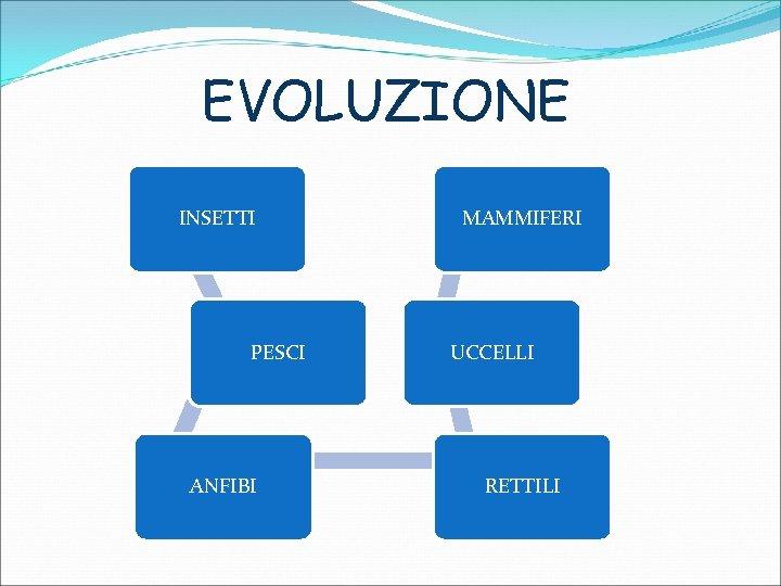 EVOLUZIONE INSETTI PESCI ANFIBI MAMMIFERI UCCELLI RETTILI