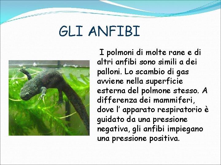 GLI ANFIBI I polmoni di molte rane e di altri anfibi sono simili a