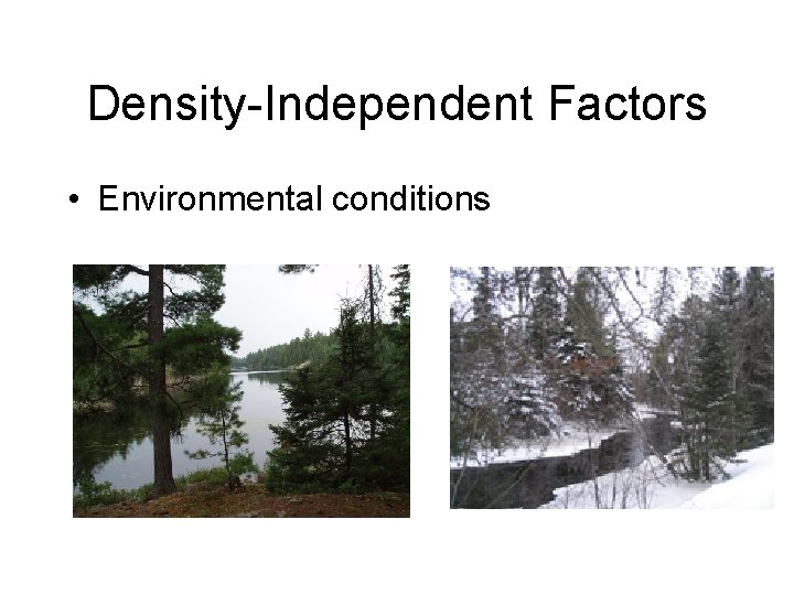 Density-Independent Factors • Environmental conditions