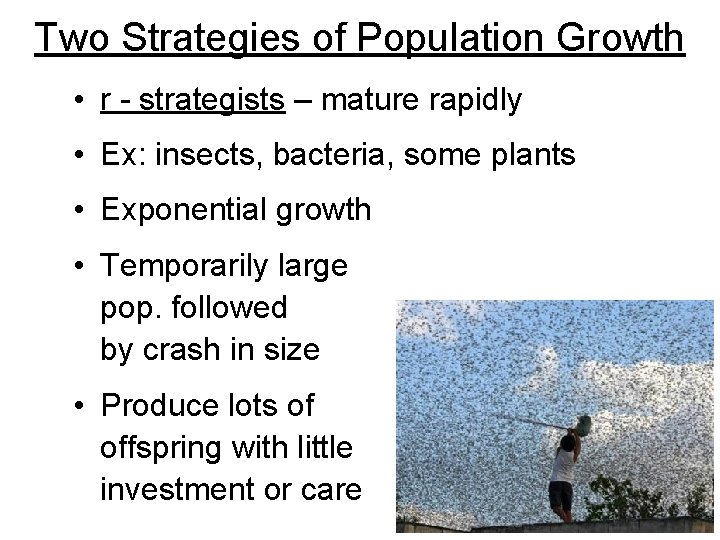 Two Strategies of Population Growth • r - strategists – mature rapidly • Ex: