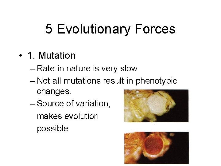 5 Evolutionary Forces • 1. Mutation – Rate in nature is very slow –