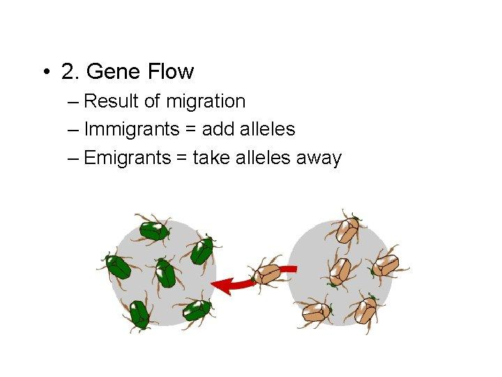 • 2. Gene Flow – Result of migration – Immigrants = add alleles