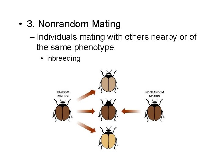 • 3. Nonrandom Mating – Individuals mating with others nearby or of the