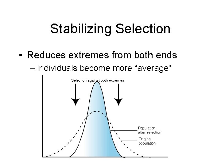 """Stabilizing Selection • Reduces extremes from both ends – Individuals become more """"average"""""""