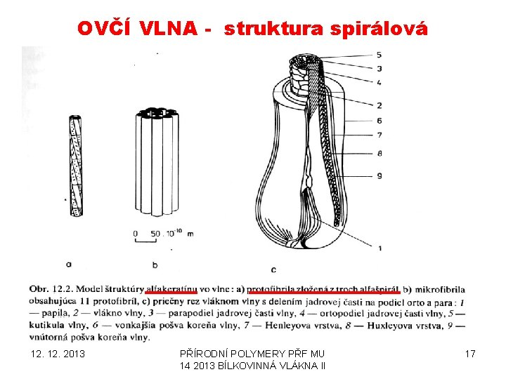 OVČÍ VLNA - struktura spirálová 12. 2013 PŘÍRODNÍ POLYMERY PŘF MU 14 2013 BÍLKOVINNÁ