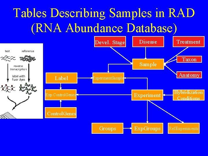 Tables Describing Samples in RAD (RNA Abundance Database) Devel. Stage Disease Sample Label Taxon