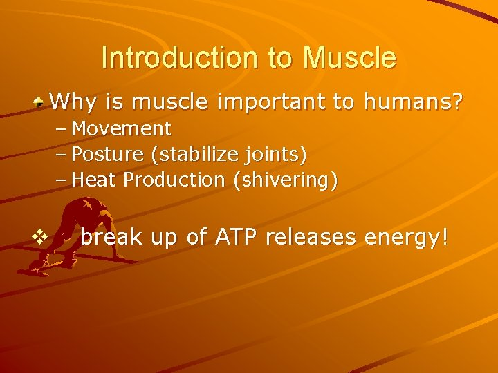Introduction to Muscle Why is muscle important to humans? – Movement – Posture (stabilize