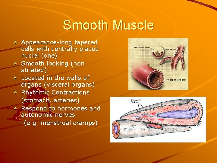 Smooth Muscle Appearance-long tapered cells with centrally placed nuclei (one) Smooth looking (non striated)