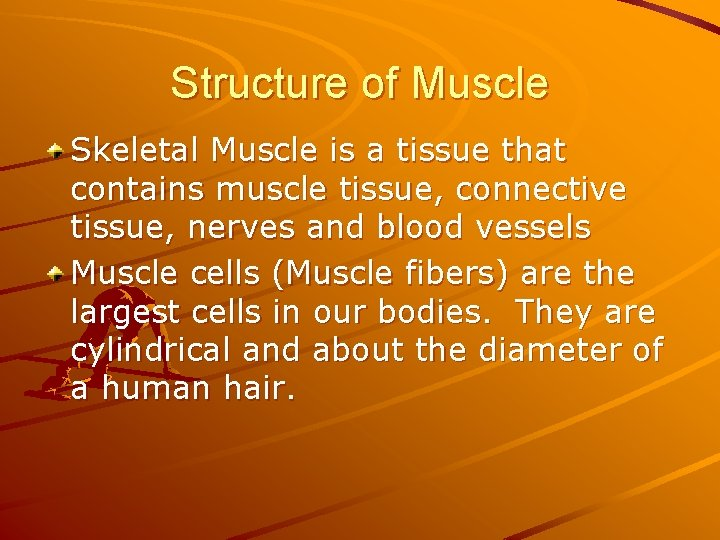 Structure of Muscle Skeletal Muscle is a tissue that contains muscle tissue, connective tissue,