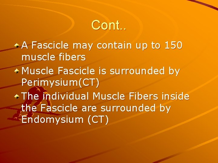 Cont. . A Fascicle may contain up to 150 muscle fibers Muscle Fascicle is