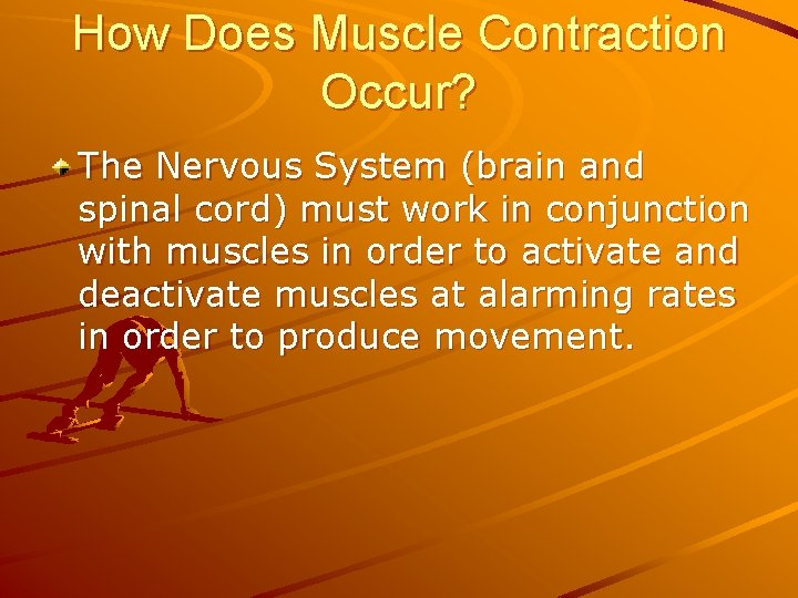 How Does Muscle Contraction Occur? The Nervous System (brain and spinal cord) must work