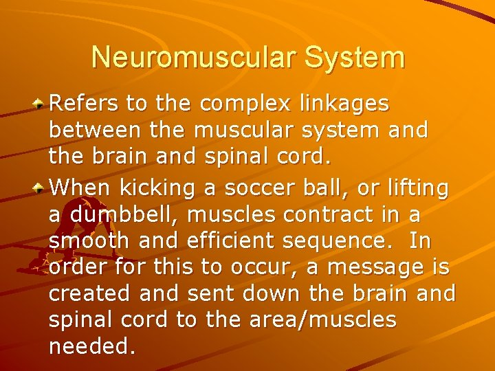 Neuromuscular System Refers to the complex linkages between the muscular system and the brain