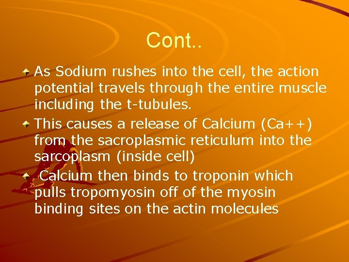 Cont. . As Sodium rushes into the cell, the action potential travels through the