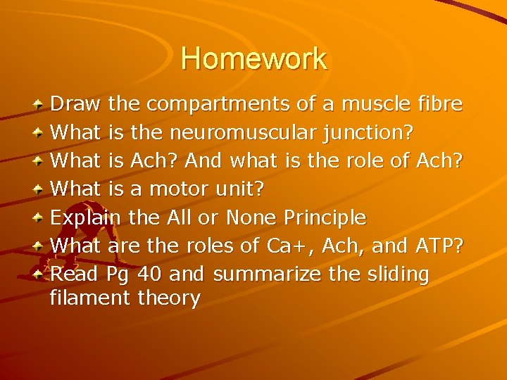 Homework Draw the compartments of a muscle fibre What is the neuromuscular junction? What