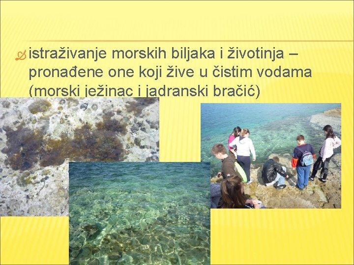 istraživanje morskih biljaka i životinja – pronađene one koji žive u čistim vodama
