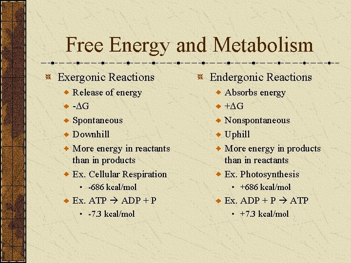 Free Energy and Metabolism Exergonic Reactions Release of energy -DG Spontaneous Downhill More energy