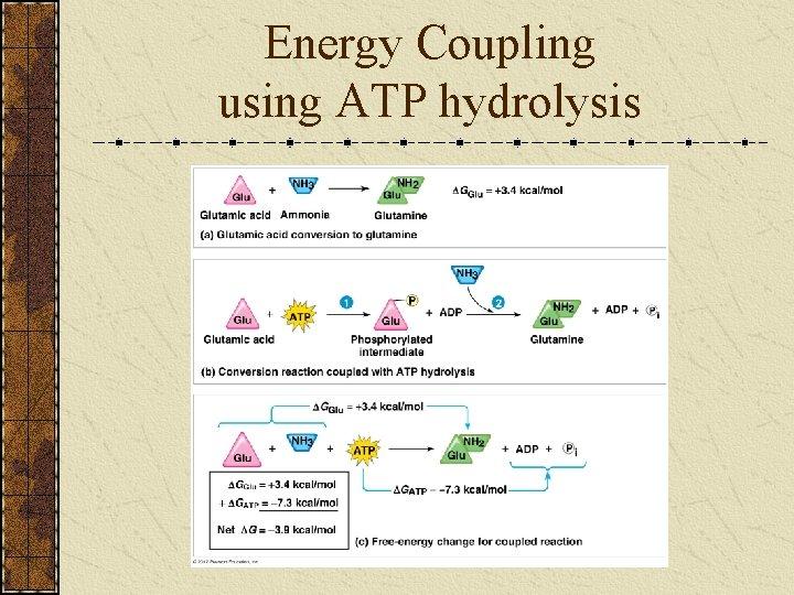 Energy Coupling using ATP hydrolysis
