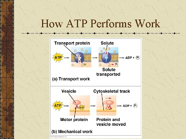 How ATP Performs Work