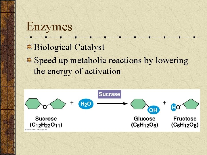 Enzymes Biological Catalyst Speed up metabolic reactions by lowering the energy of activation