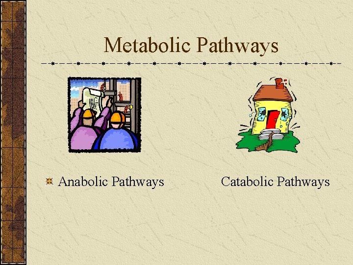 Metabolic Pathways Anabolic Pathways Catabolic Pathways