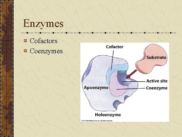 Enzymes Cofactors Coenzymes