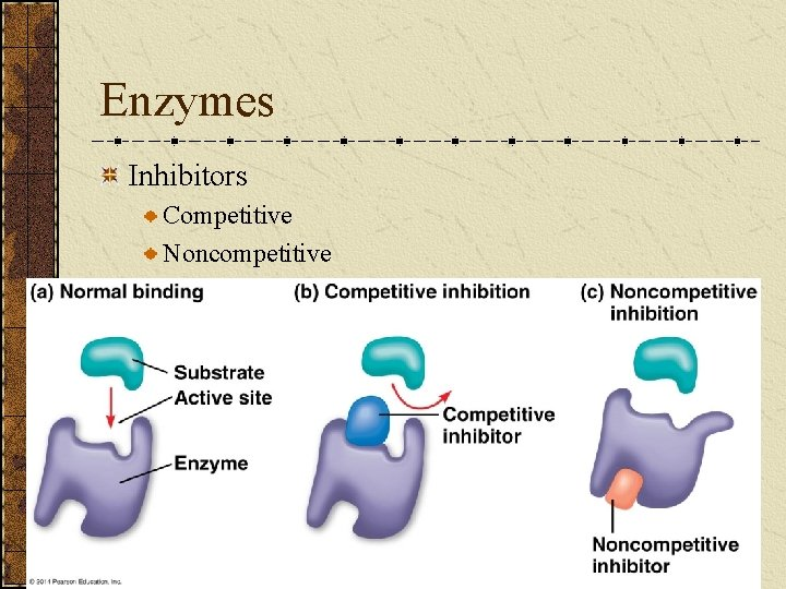Enzymes Inhibitors Competitive Noncompetitive