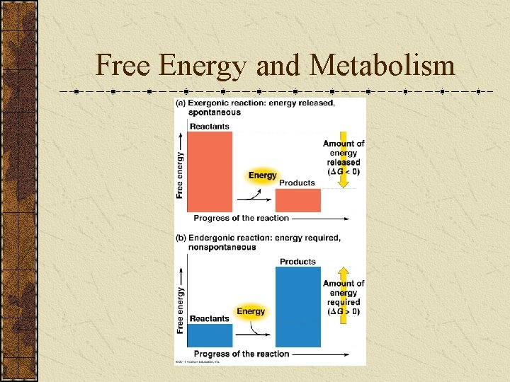Free Energy and Metabolism