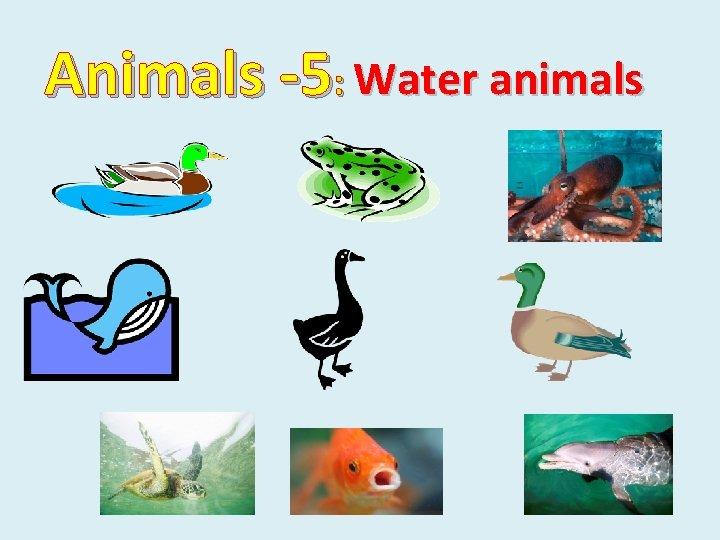 Animals -5: Water animals