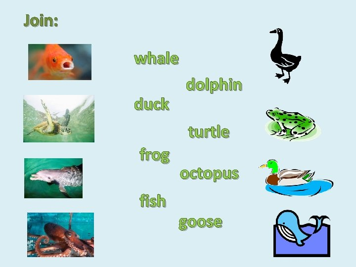 Join: whale duck dolphin turtle frog fish octopus goose