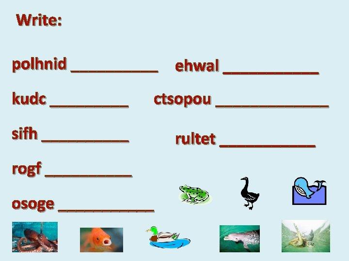 Write: polhnid _____ ehwal ______ kudc _____ ctsopou _______ sifh _____ rultet ______ rogf