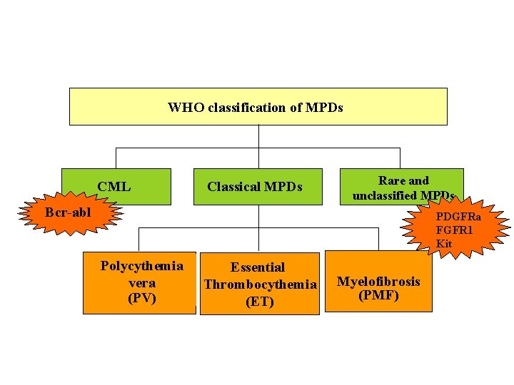 WHO classification of MPDs CML Classical MPDs Rare and unclassified MPDs Bcr-abl PDGFRa FGFR