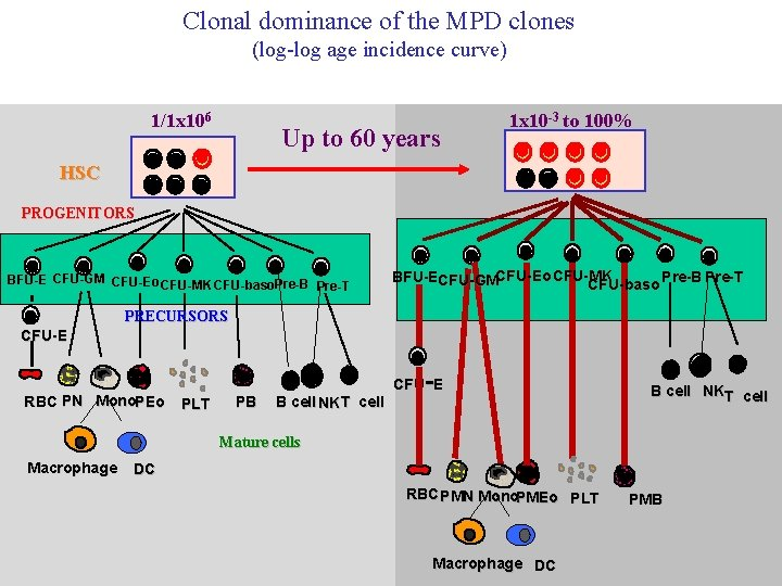 Clonal dominance of the MPD clones (log-log age incidence curve) 1/1 x 106 Up