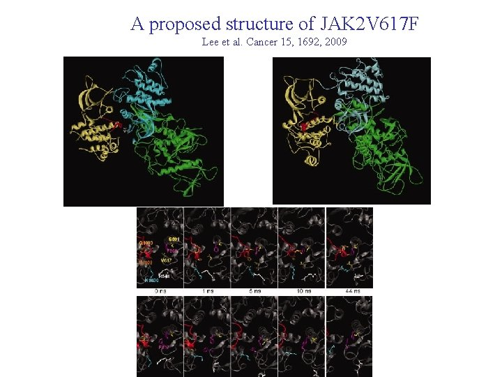 A proposed structure of JAK 2 V 617 F Lee et al. Cancer 15,