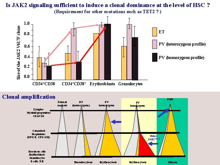 Is JAK 2 signaling sufficient to induce a clonal dominance at the level of