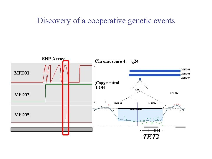 Discovery of a cooperative genetic events SNP Array Chromosome 4 q 24 MPD 01