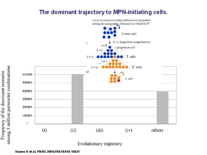 The dominant trajectory to MPN-initiating cells. Haeno H et al. PNAS 2009; 106: 16616