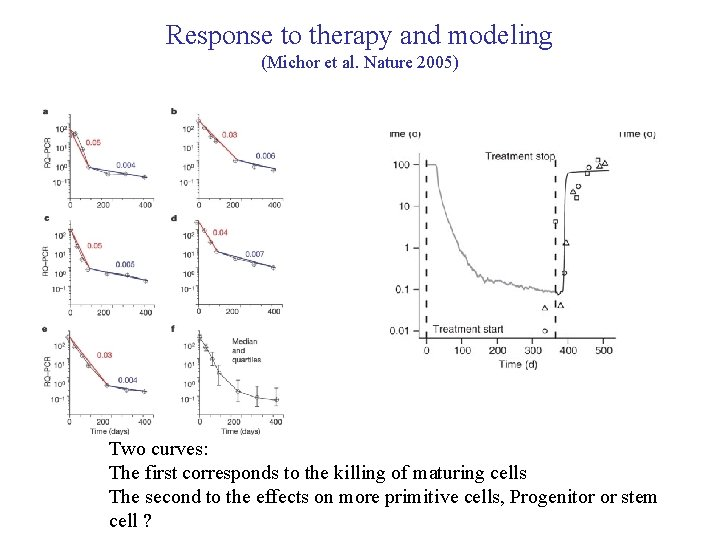 Response to therapy and modeling (Michor et al. Nature 2005) Two curves: The first