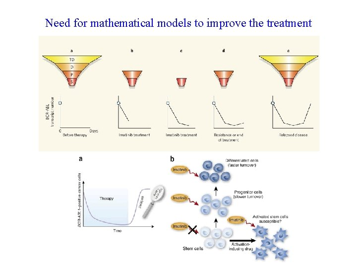 Need for mathematical models to improve the treatment