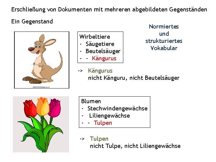 Erschließung von Dokumenten mit mehreren abgebildeten Gegenständen Ein Gegenstand Wirbeltiere - Säugetiere - Beutelsäuger